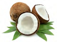 contact us for coconut fuel
